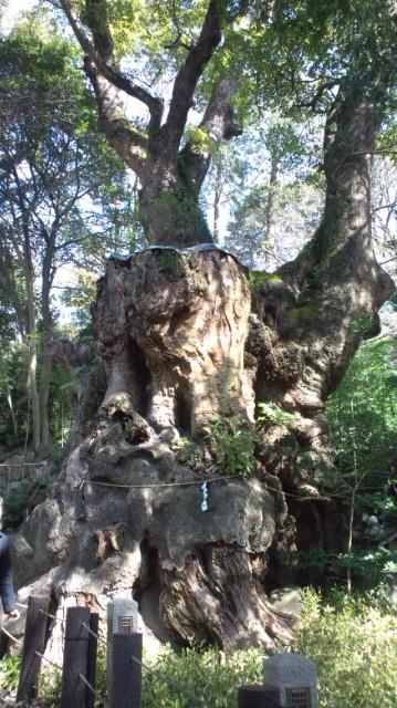 樹齢2000<br />  年の大楠のパワーを頂いてきました(^o^)